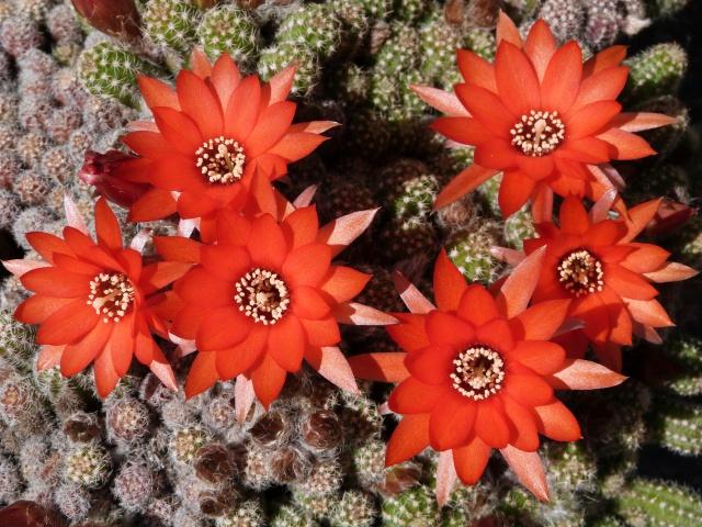 cactus - Page 2 676229P1180525
