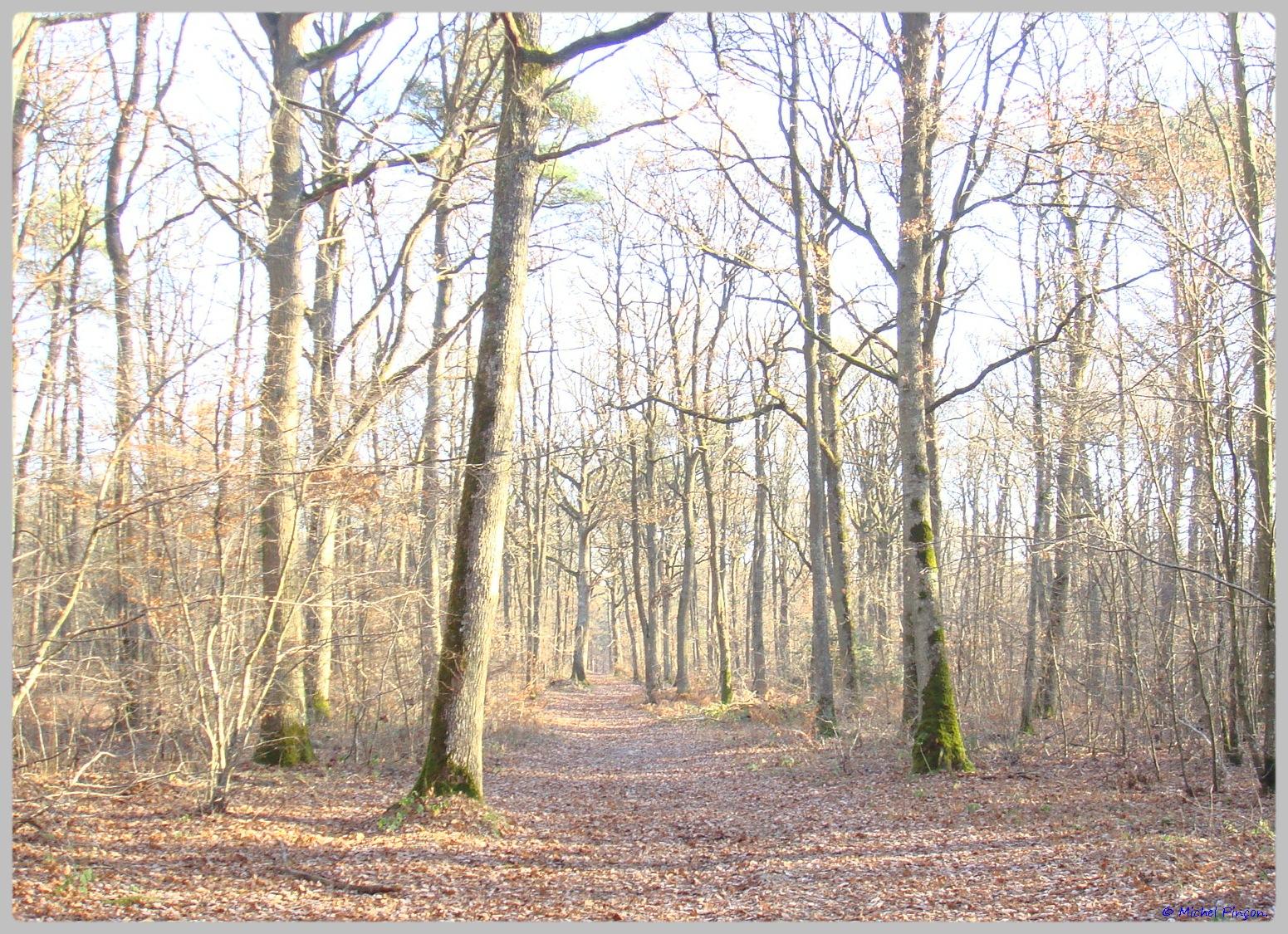 [fil ouvert] la forêt dans tous ses états - Page 11 677037DSC011651
