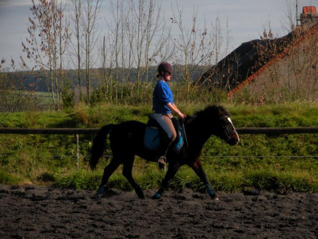 Comment avez vous rencontrer/acheter votre cheval? 681908DSCN0179JPG