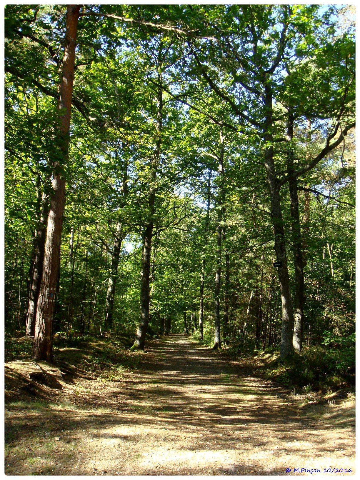 [fil ouvert] la forêt dans tous ses états - Page 6 682019DSC011085