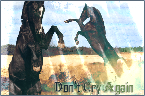 DON'T CRY AGAIN - ♀ - SAUVAGE 682291DontCry