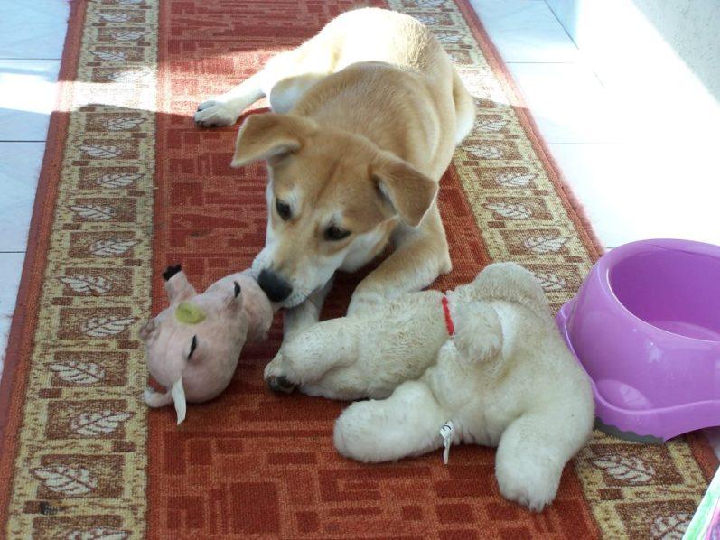 Corie, femelle, 3 mois, joli croisement, très sociable - 7 octobre 2011 - Page 2 68623185B