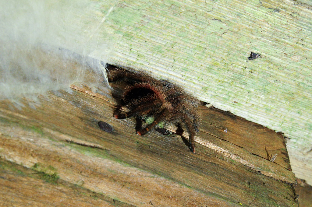 (FIL OUVERT à tous) vous aimez les araignées? 687868Equateur111282