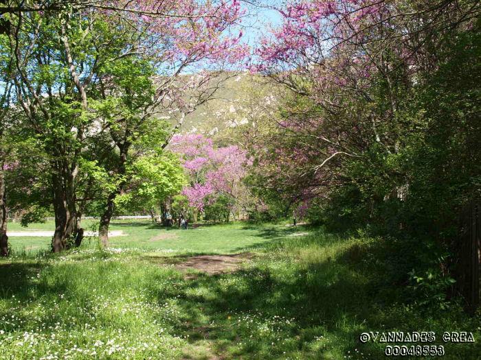 """La Vallée de St Pons """" La Vallée Rose """" à Gemenos Bouches du Rhône ♥♥♥ 69039743"""
