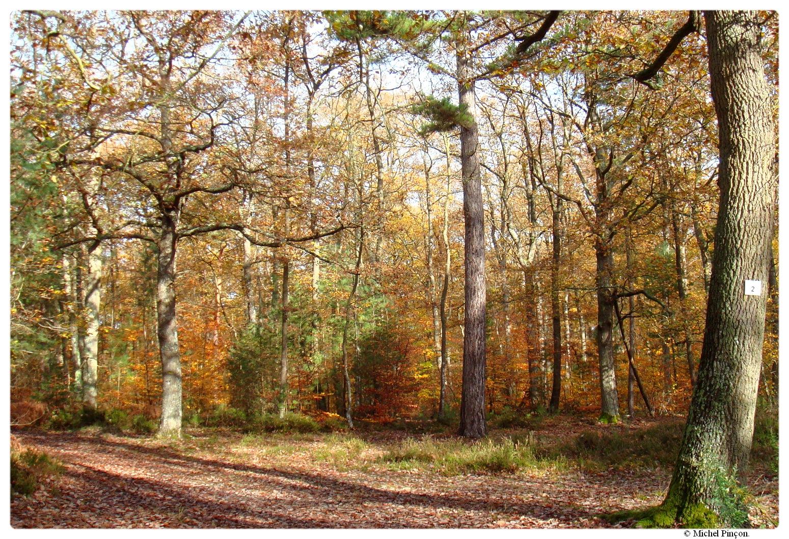 [fil ouvert] la forêt dans tous ses états - Page 17 691340DSC014342