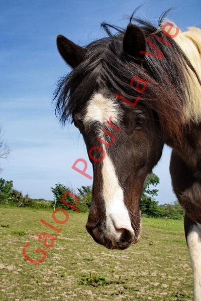 LOONY -  ONC poney né en 2001 - Adopté en juin 2011 par Carole 704834IMG4868