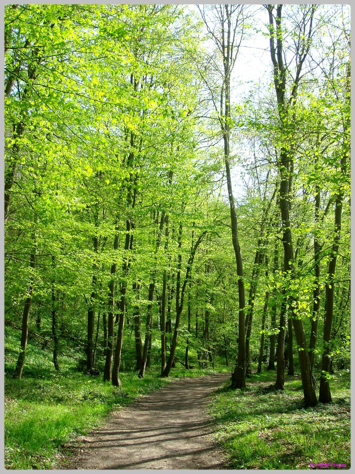 [fil ouvert] la forêt dans tous ses états - Page 13 706880DSC012559