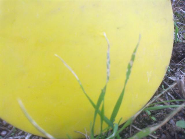 Blé en SD sur prairies: suivi des parcelles - Page 2 71196114102013445