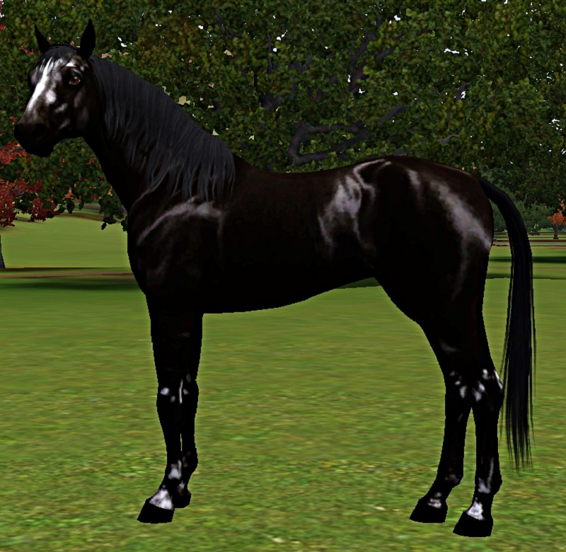 "[Challenge] Teens and Horses ""Sims 3"" - Page 3 712713Polka"