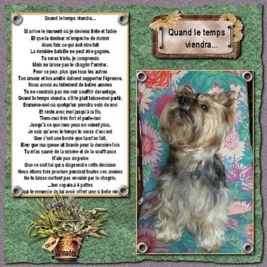HOMMAGE pour mes Sept chiens 713140OliveretPoesie