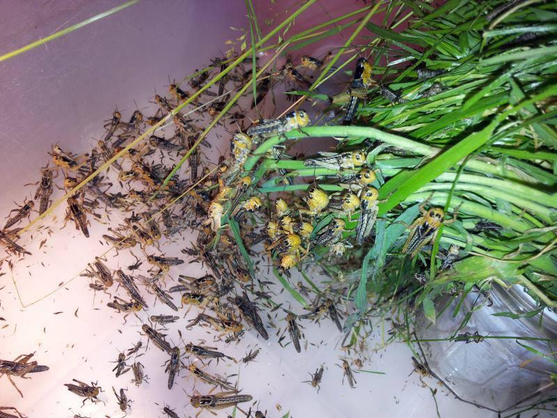 Elevage d'insectes en photos... Pourquoi pas?! 716596562