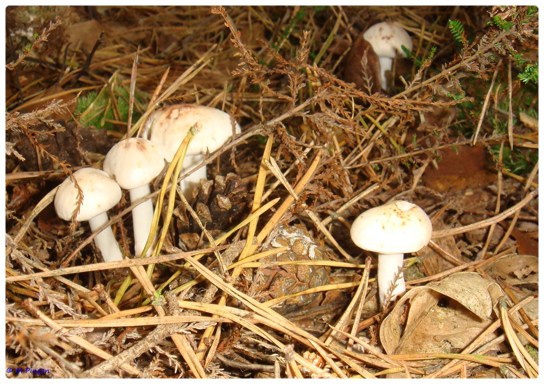 [fil ouvert] les champignons 718125DSC011159