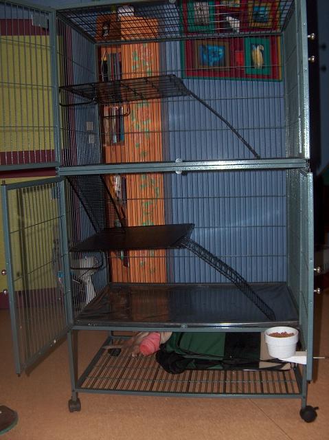 Vends cage nation 2 pour furets (à voir pour rats) 719196HPIM2680