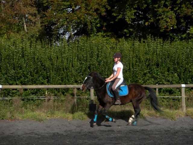 Comment avez vous rencontrer/acheter votre cheval? 720725DSCN0210JPG