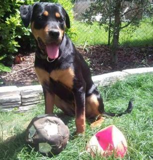 Ici venez remplir la fiche d'identité de votre chien avec sa photo à la suite des autres chiens du forum 732197103436SNC00487