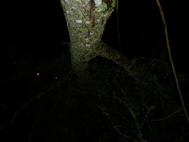 Orages monstres sur le Bordelais dans la nuit du 25 au 26/07 et du 26 au 27/07 739594P1200616
