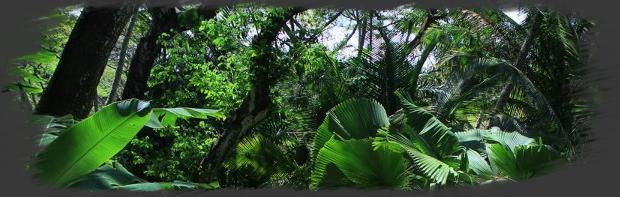 Jungle Sombre