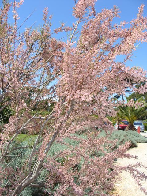 jardin du sud - Page 5 752442az007