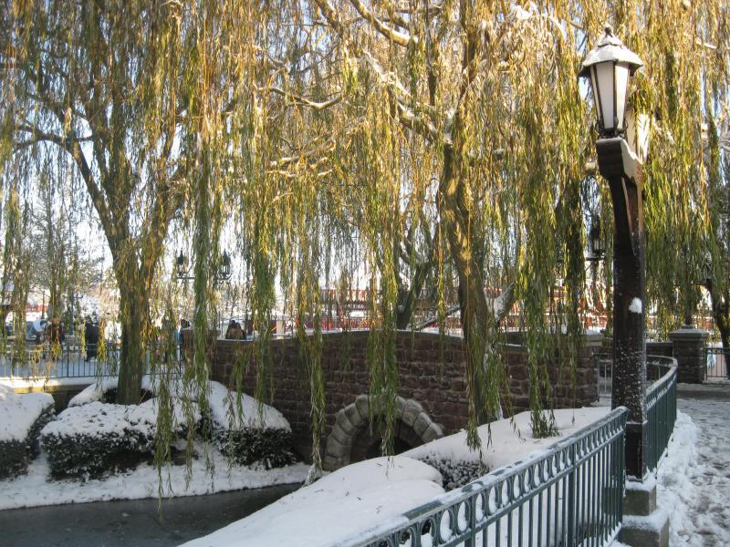 [Disneyland Paris] Disneyland Hotel - chambre Castle Club (8-10 décembre 2010) (début du TR p.9) - Page 9 753517IMG2158