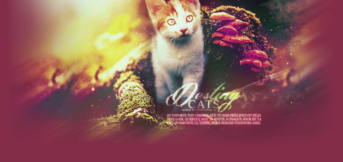 Cats Destiny
