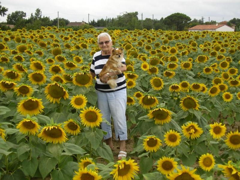 A une fleur poésie 756947IMGP56211