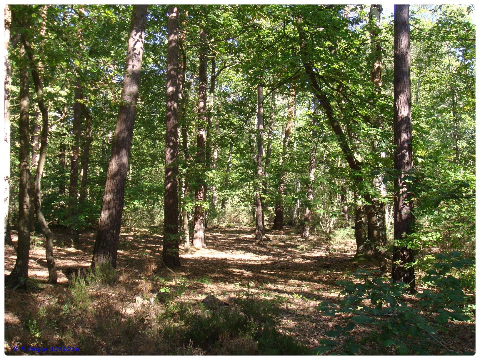 [fil ouvert] la forêt dans tous ses états - Page 6 759797DSC011074