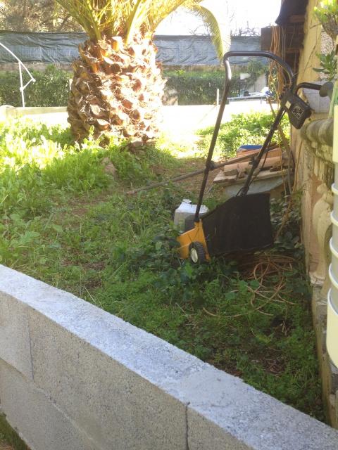 Enclos sulcata/Triunguis 760993Giovanni078
