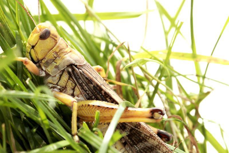 Elevage d'insectes en photos... Pourquoi pas?! 769675545