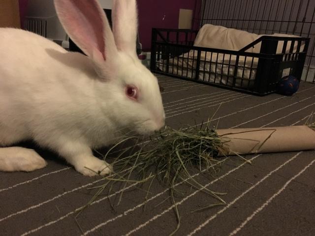 Association White Rabbit - Réhabilitation des lapins de laboratoire - Page 2 769860IMG7314