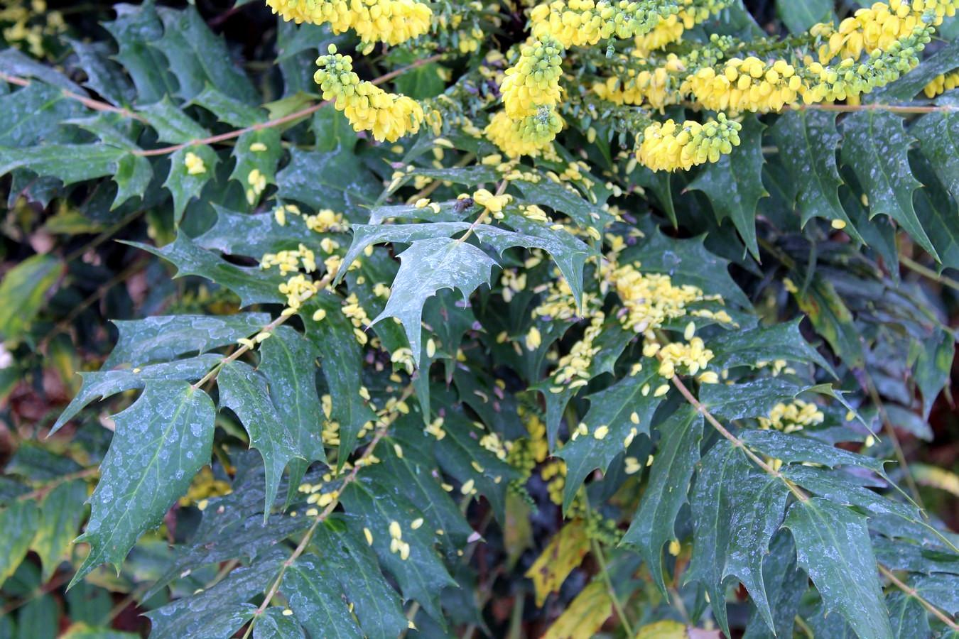 [Fil ouvert] Fleurs et plantes - Page 8 774835063Copier