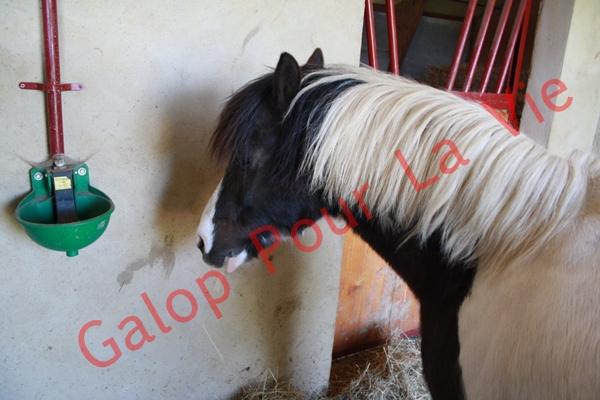 LOONY -  ONC poney né en 2001 - Adopté en juin 2011 par Carole 777676IMG4978