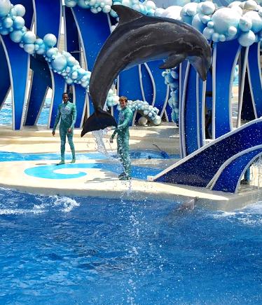 [Photos Dauphins] Sauts les plus impressionnants 778353JumpDolphin