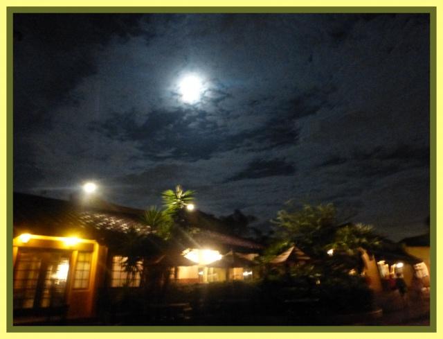 The trip of  a Lifetime : du 28 juillet au 11 aout, Port Orleans Riverside, Que d'émotions ! - Page 17 780040MK437