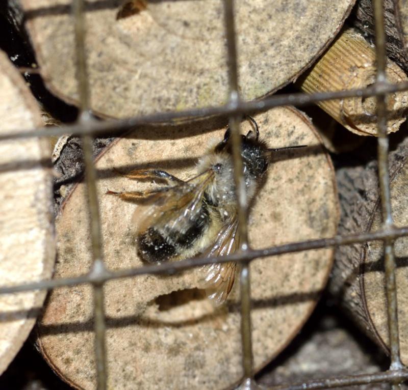 hôtels à insectes et autres HLM à bestioles  - Page 4 784271MAISONINSECTES3