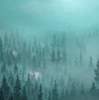 La forêt de Matrame