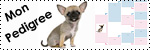 Forum Chihuahua : Mini Dog's Chihuahua 786206genealogie