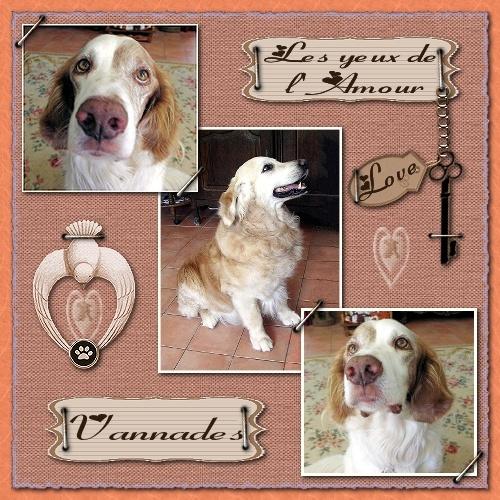 HOMMAGE pour mes Sept chiens 787175JazzetSultan