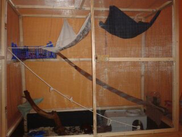 Ma nouvelle cage   !  ( besoins de conseils d'aménagements svp )  - Page 2 7900681367591487438