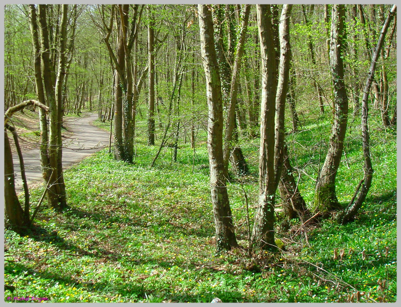 [fil ouvert] la forêt dans tous ses états - Page 13 790086DSC012506