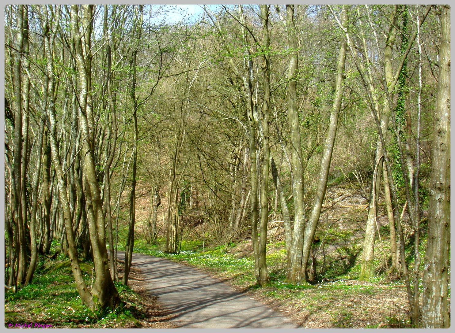 [fil ouvert] la forêt dans tous ses états - Page 13 790614DSC012505
