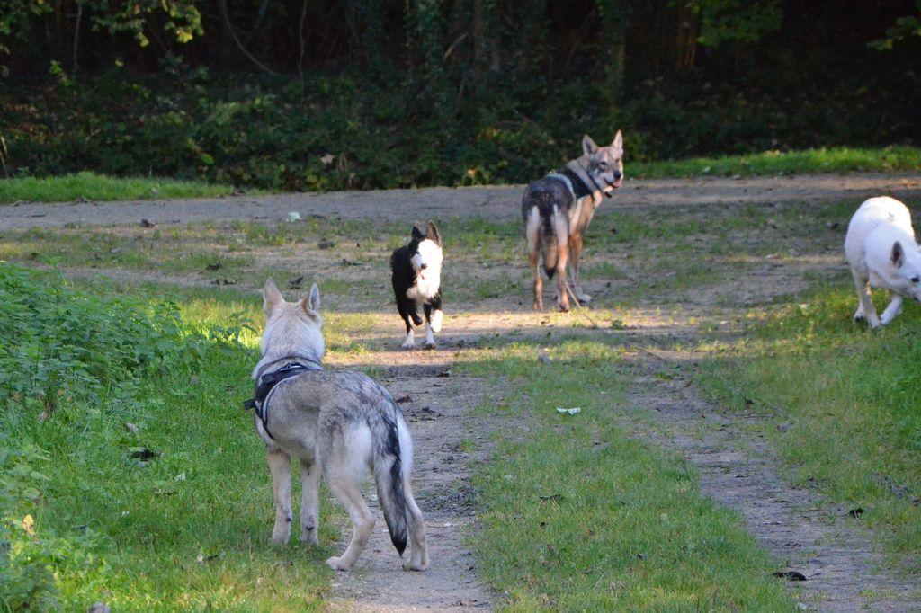 border - L'éducation de ma chienne, Jeune border collie - Page 2 792103CSC2299