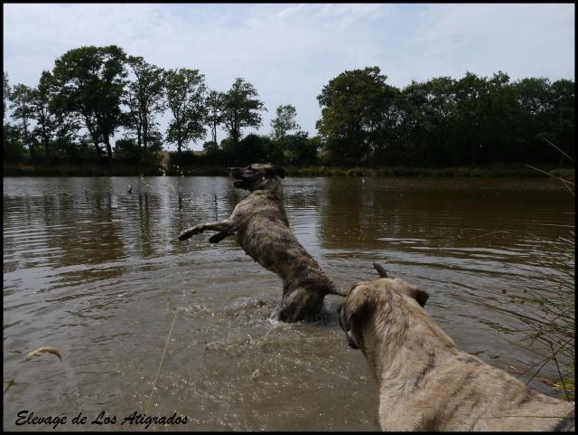 Inti de Los Atigrados (Cimarron Uruguayen) 795633P1270307JPG1