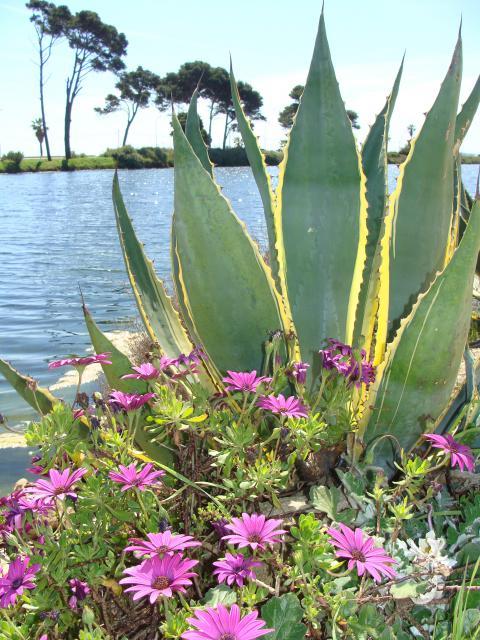 jardin du sud - Page 5 795797az008