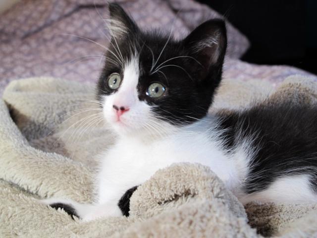Alerte pour les amoureux des chats - Page 2 796460IMG6648800x600