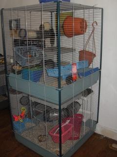 Photos de vos cages - Page 38 797490octobre20132