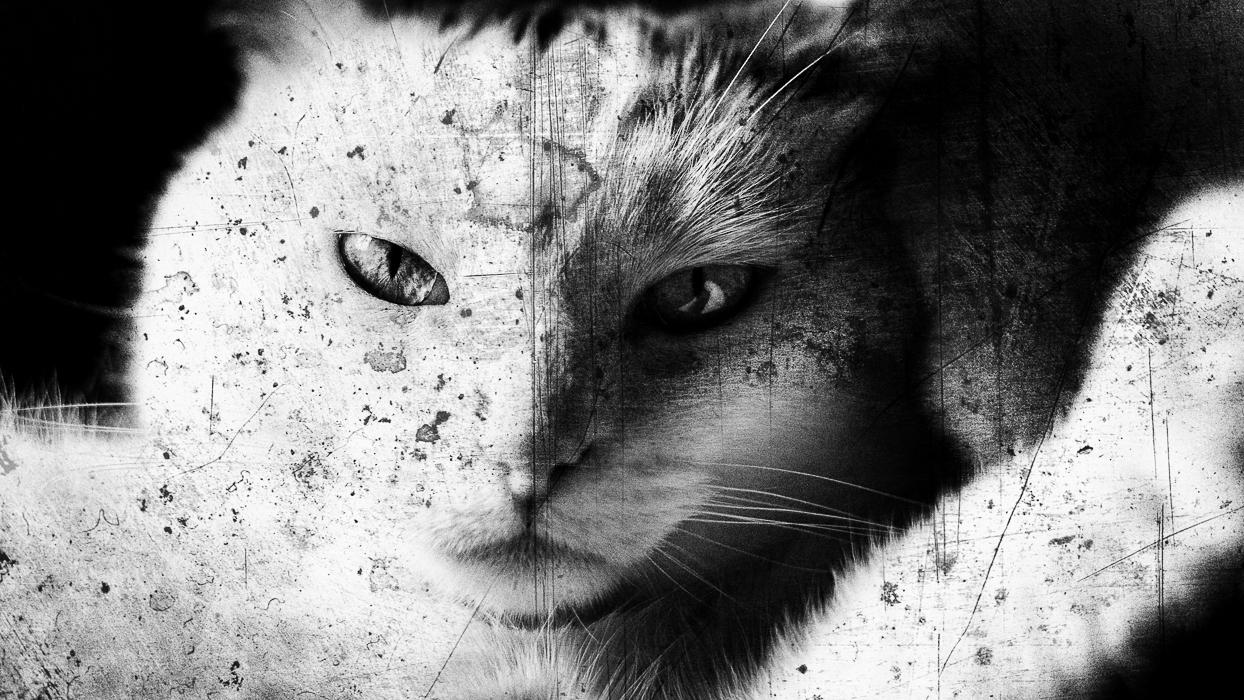 Lou'cat me !  797529finkali