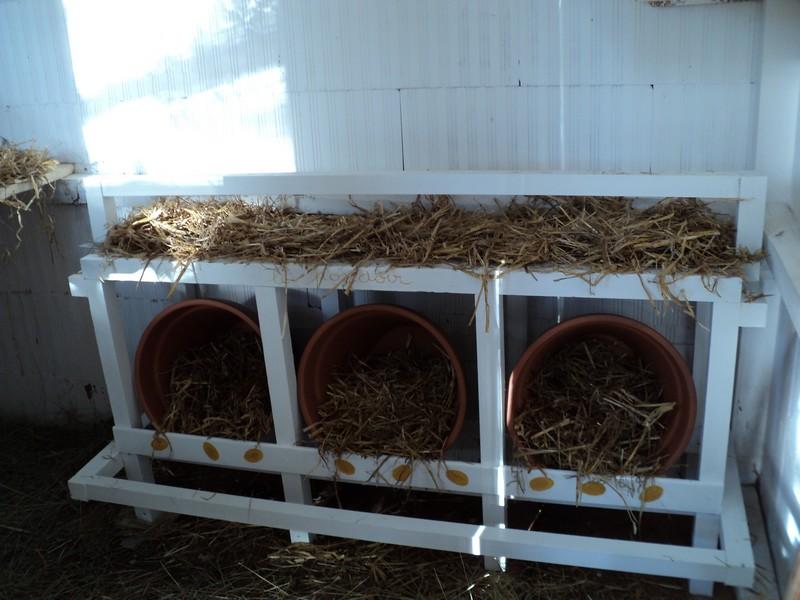 poules - Quelques modèles de pondoirs pour nos poules 797879DSC02580