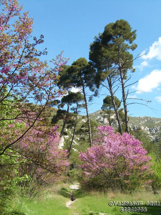 """La Vallée de St Pons """" La Vallée Rose """" à Gemenos Bouches du Rhône ♥♥♥ 8002705"""