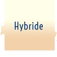 Hybride Mâle