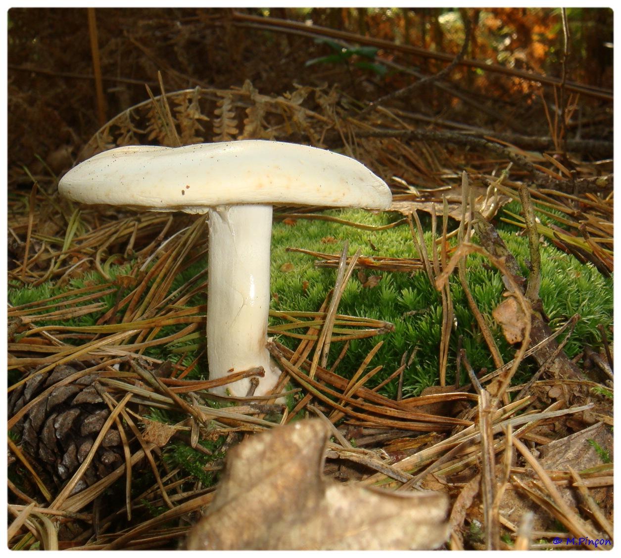 [fil ouvert] les champignons 806629DSC011160